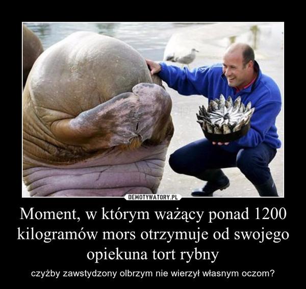 Moment, w którym ważący ponad 1200 kilogramów mors otrzymuje od swojego opiekuna tort rybny – czyżby zawstydzony olbrzym nie wierzył własnym oczom?