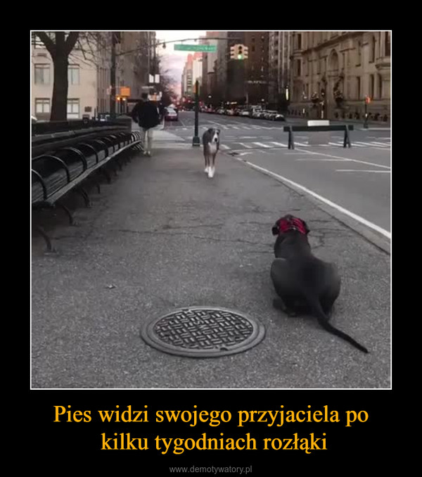 Pies widzi swojego przyjaciela po kilku tygodniach rozłąki –