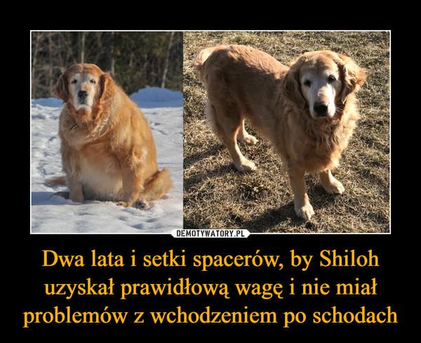 Dwa lata i setki spacerów, by Shiloh uzyskał prawidłową wagę i nie miał problemów z wchodzeniem po schodach –