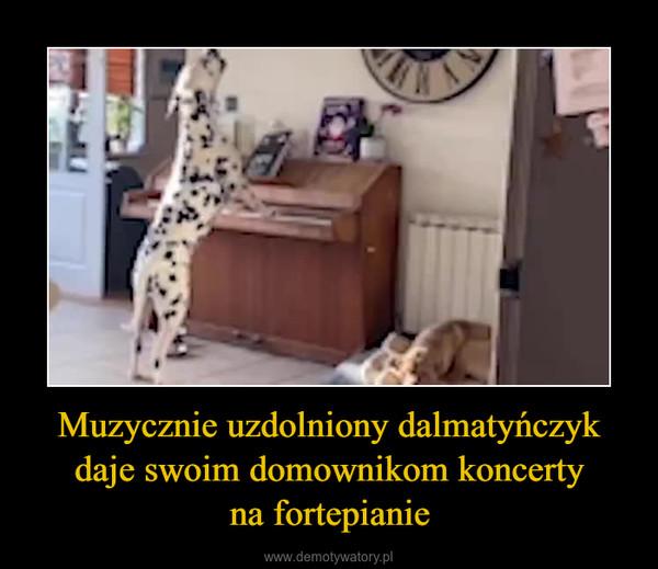 Muzycznie uzdolniony dalmatyńczyk daje swoim domownikom koncertyna fortepianie –