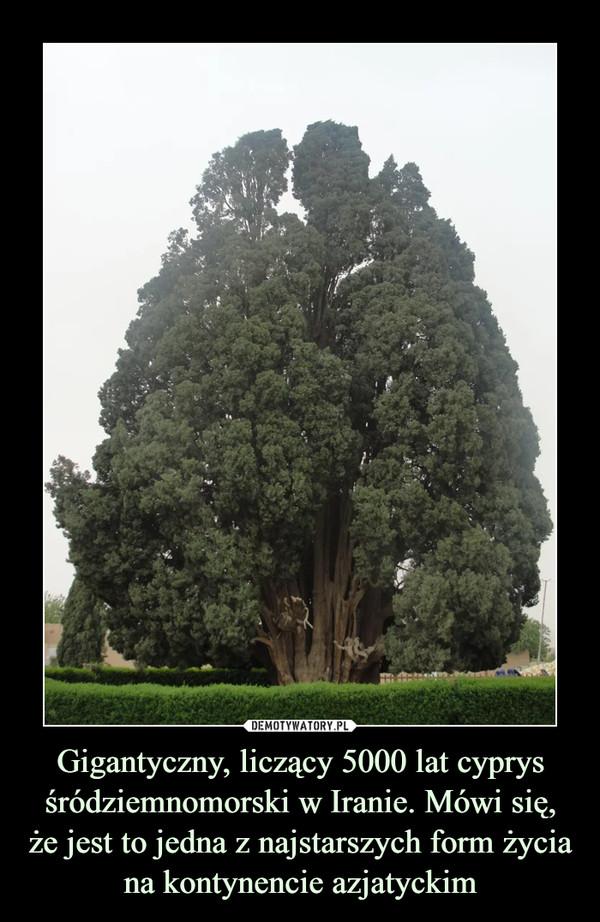 Gigantyczny, liczący 5000 lat cyprys śródziemnomorski w Iranie. Mówi się, że jest to jedna z najstarszych form życia na kontynencie azjatyckim