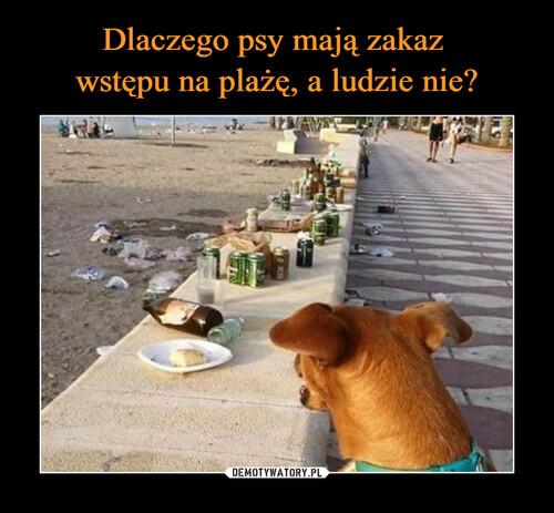 Dlaczego psy mają zakaz  wstępu na plażę, a ludzie nie?