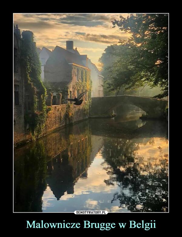 Malownicze Brugge w Belgii –