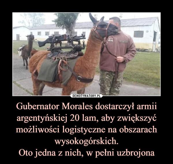 Gubernator Morales dostarczył armii argentyńskiej 20 lam, aby zwiększyć możliwości logistyczne na obszarach wysokogórskich.Oto jedna z nich, w pełni uzbrojona –